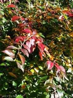 Syksyn värejä - colours of autumn