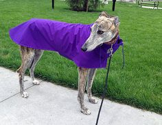 All HiTech Raincoat for Greyhounds  to be custom by AcmeCouture, $55.00 - Yellow for Elf