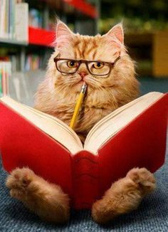 cat reading a book and wearing glasses