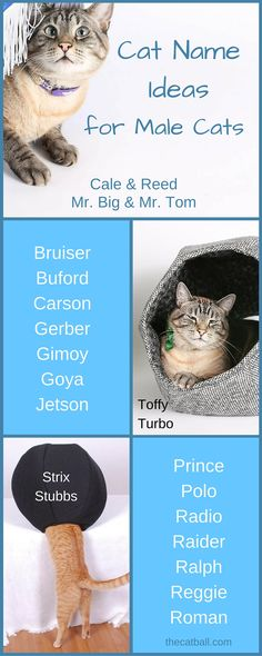 Ideas for names for male cats - Cat Name Ideas for Male Cats  Do you have a new…