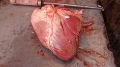 Beef Heart -Bandra Slaughter House Slums