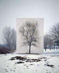 Tree series by Myou Ho Lee
