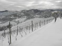 Sotto le neve pane...e vino! #vineyards