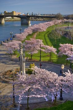 Waterfront Park, Portland, Oregon, USA