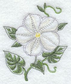 Moonflower Beauty
