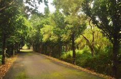 屏東滿茶古道綠意盎然 開放生態旅遊