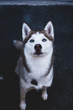 captvinvanity:  Husky | Photographer | CV
