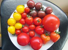 Readers' Photos - #Tomatoes - Helen Gowland