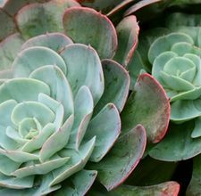 How To Take Care Of Succulent House Plants
