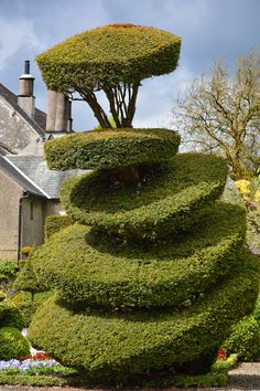 Topiary, Levens Hall Gardens, Cumbria, England (Photo: H. Travis)