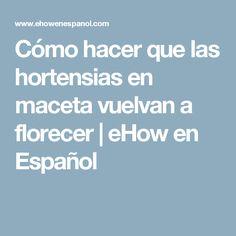 Cómo hacer que las hortensias en maceta vuelvan a florecer | eHow en Español