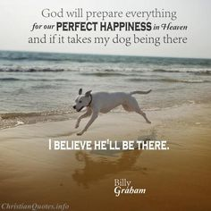 """God will prepare everything for our perfect happiness in heaven, and if it takes my dog being there, I believe he'll be there.""  - Billy Graham For more Christian and inspirational quotes, please visit www.ChristianQuotes.info #Christianquotes #BillyGraham"