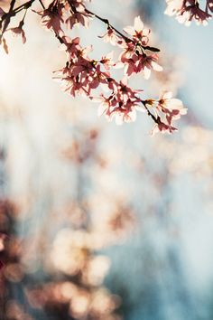 WE ♥ THIS!  ----------------------------- Original Pin Caption: Cherry Blossom Girl