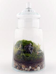 Fairy Garden Terrarium | Gardeners.com