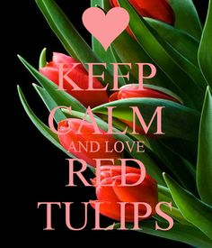 KEEP CALM AND LOVE RED TULIPS .