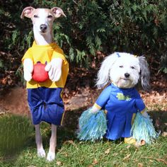 Remy, a Whippet mix and Scribble a Chinese crested Powder Puff enjoying a Halloween party