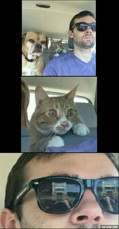 Crazy Funny Memes, Really Funny Memes, Stupid Funny Memes, Funny Laugh, Funny Relatable Memes, Funny Humor, Funny Animal Jokes, Cute Funny Animals, Animal Memes