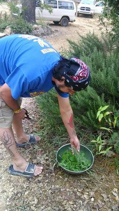 Ricky harvesting herbs for dinner...rosemary, lemon grass chives, etc!