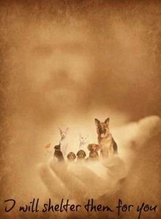 Thank you so much Jesus! My heart still misses my beloved fur and feathered babies I Love Dogs, Puppy Love, Cute Dogs, Dog Poems, Dog Quotes, Animals And Pets, Baby Animals, Cute Animals, Pet Loss Grief