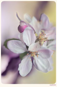 Blossom - 1 by anjali