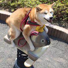 Such a wonderful ride. Happy happy Dog. http://ift.tt/1UIDgCd