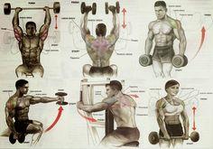 The Fitness Era: Shoulder Workout!