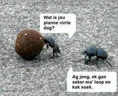 South African Dung beetle humour in Afrikaans! Afrikaanse Quotes, Animal Quotes, Work Quotes, Twisted Humor, Birthday Quotes, Fun To Be One, Laugh Out Loud, Life Lessons, Laughter