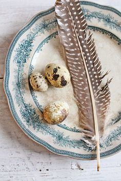 Pretty eggs and feather - Spring is coming!