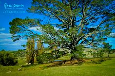 Project New Zealand: Lord of the Rings Edition (part II) The Party Tree