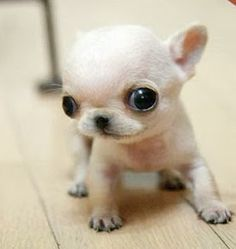 So tiny...