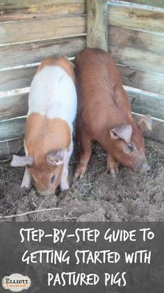 An easy, step-by-step guide and cost breakdown to getting set up with pastured pigs for the first time | The Elliott Homestead
