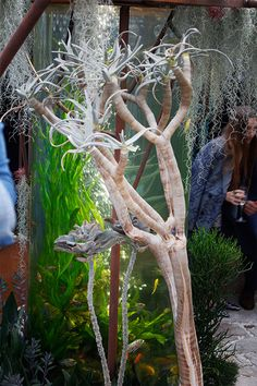 Pearlfisher garden at RHS Chelsea Flower Show 2018 Chelsea Flower Show 2018, Show Reviews, Floral, Garden, Flowers, Garten, Lawn And Garden, Gardening, Royal Icing Flowers