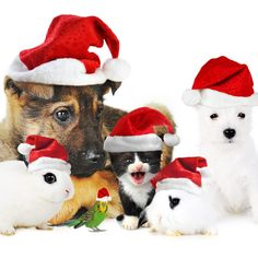 Animals at Christmas :)