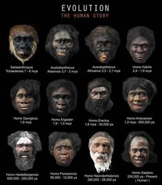 Human Evolution - Some Classifications