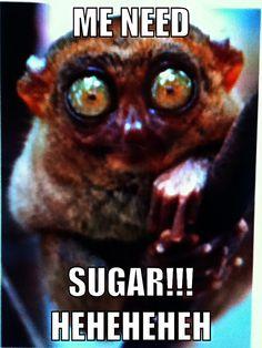 Lemur hahahah