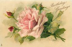 Birthday Greetings ~ pink rose, three buds