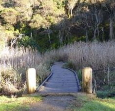 Wye River, just 20 minutes from Lorne and 35 minutes from Apollo Bay, gives visitors the full experience of the region with isolated serenity. Apollo Bay, Dog Travel, Bird Watching, Beautiful Beaches, Serenity, Paths, Trail, Waterfall, Surfing