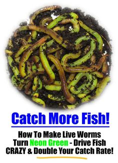 How To Make Live Composting Worms Turn Neon Green To Drive Fish Crazy and Improv. - How To Make Live Composting Worms Turn Neon Green To Drive Fish Crazy and Improve Your Catch Rate… Fishing Worms, Crappie Fishing, Gone Fishing, Fishing Bait, Best Fishing, Fishing Tips, Fishing Stuff, Catfish Fishing, Fishing Tackle