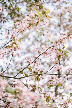 Little and Blooming Spring Photography, Nature Photography, Wild Flowers, Beautiful Flowers, Spring Aesthetic, No Rain, Prunus, Spring Is Here, Plantar