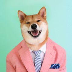 Menswear Dog   Um cachorro que dá dicas de moda masculina