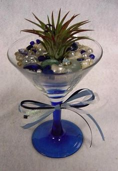 Air Plant in Cocktail Glass