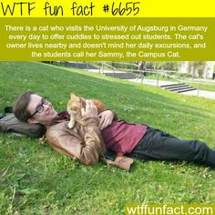 Sammy, the Campus Cat - WTF fun fact and like OMG! get some yourself some pawtastic adorable cat apparel! Animal Facts, Cat Facts, Animal Memes, Funny Animals, Cute Animals, Wtf Fun Facts, Funny Facts, Funny Memes, Strange Facts