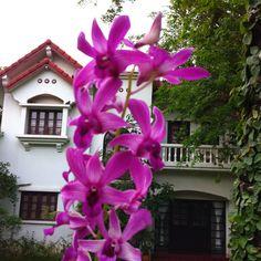 Management house plants