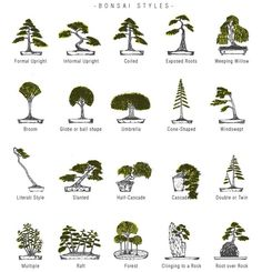 bonsai tree styles