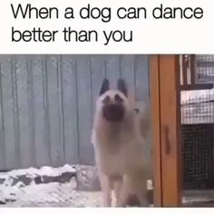 It's Saturday 🥳 Do you know someone who dances badly 😂 Tag him and say nothing 😎. Credits unknown via . Dog Jokes, Funny Animal Jokes, Funny Dog Memes, Funny Dog Videos, Funny Animal Pictures, Animal Memes, Cute Baby Dogs, Cute Funny Dogs, Cute Funny Animals