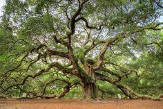 Angel Oak Tree Of Life by Dustin K Ryan