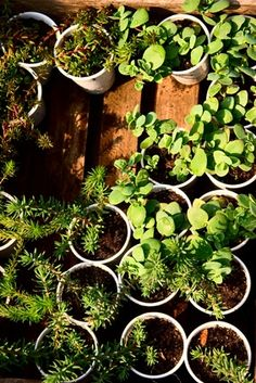 The Best Soil Mix for Herbs for Container Gardening