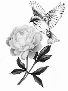 My next tattoo // bluebird and peony