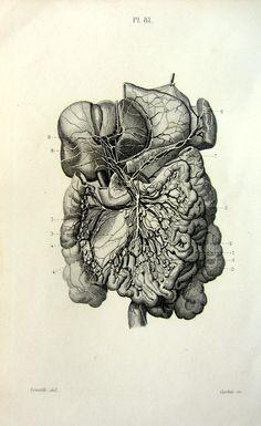Vintage ANATOMY internal organs engraving 1852 by LyraNebulaPrints