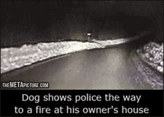 You wish your dog was this awesome…